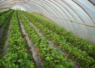 use heavy duty tarps greenhouse cover